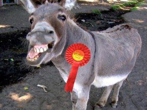 labour donkey